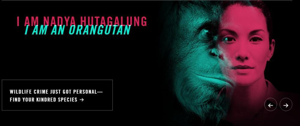 nadya-hutagalung-orangutan